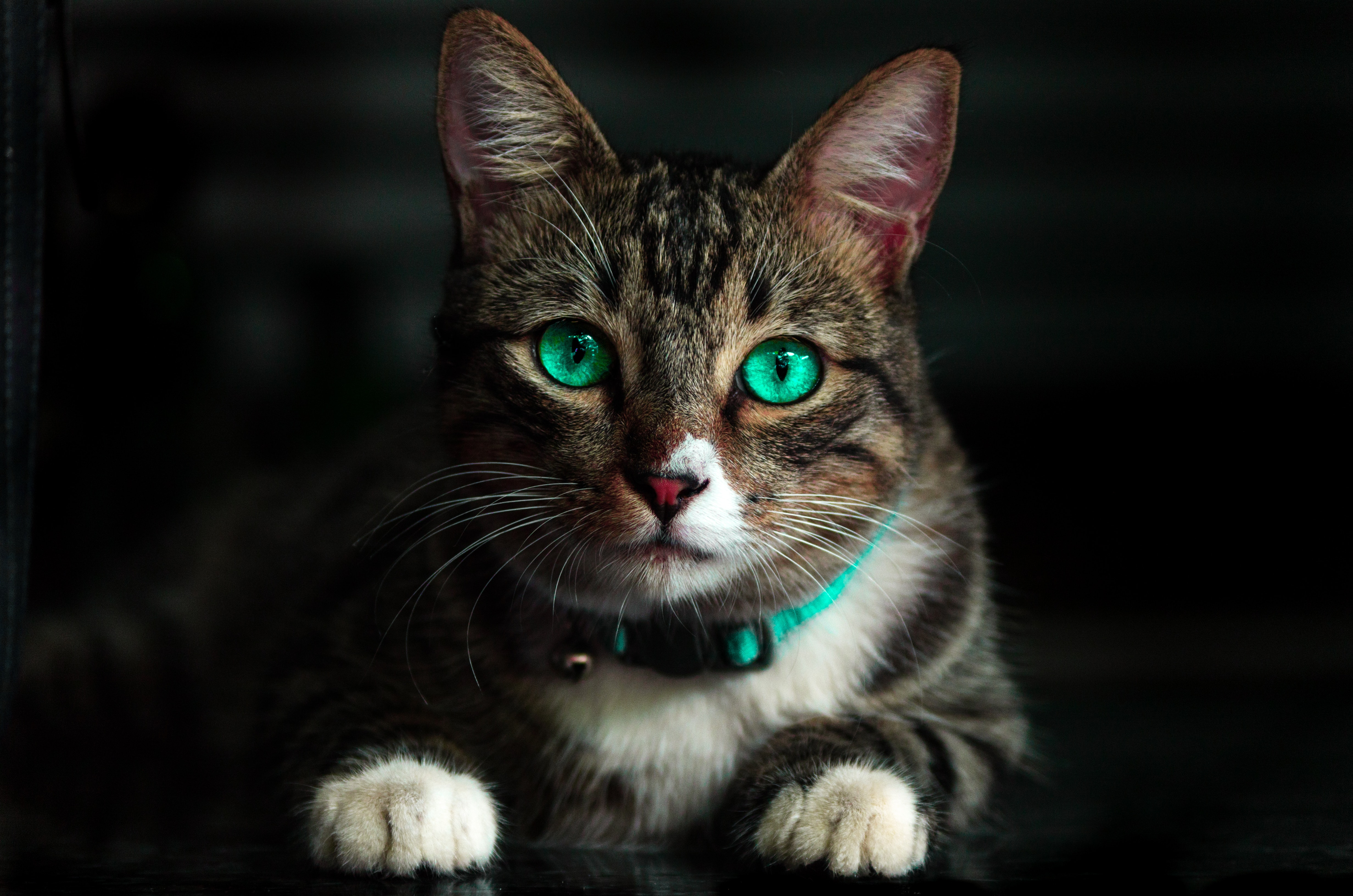 Brown Cat With Green Eyes Free Stock Photo