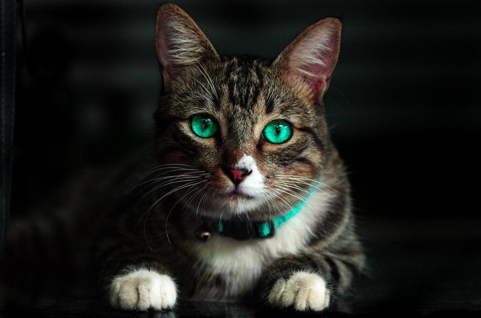 Sentidos gatos - vista