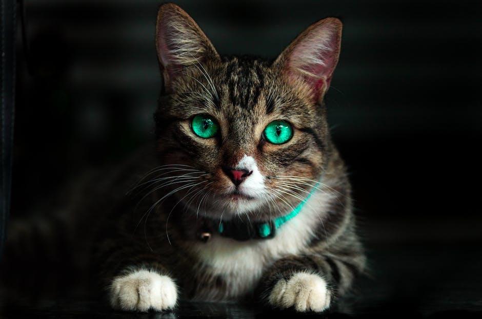 New free stock photo of animal, cute, eyes