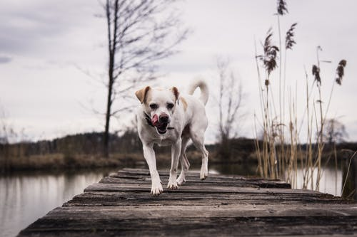 おもしろい, コールド, ペットの無料の写真素材