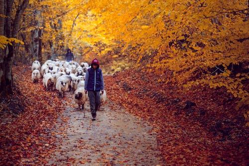 Kostenloses Stock Foto zu atmosfera de outono, herbst, herbstfarbe