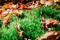nature, grass, blur