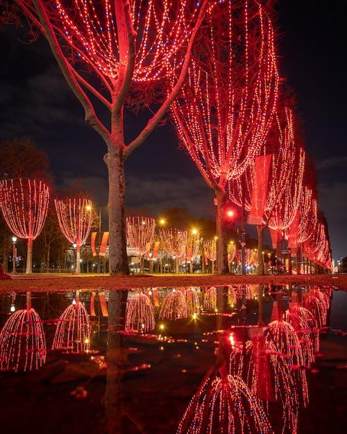 Immagine gratuita di alberi, architettura, attrezzatura per l'illuminazione