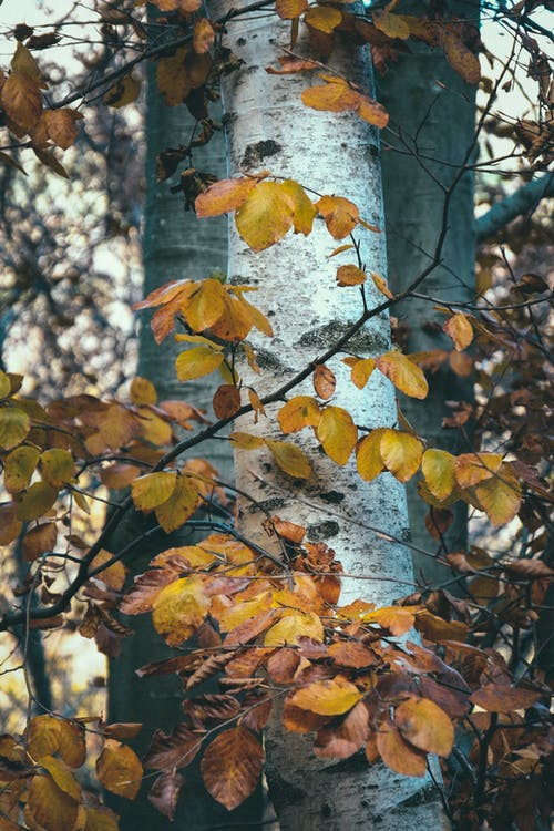 Wavy sprigs with yellow foliage growing against high deciduous trees with rough bark in forest in fall season