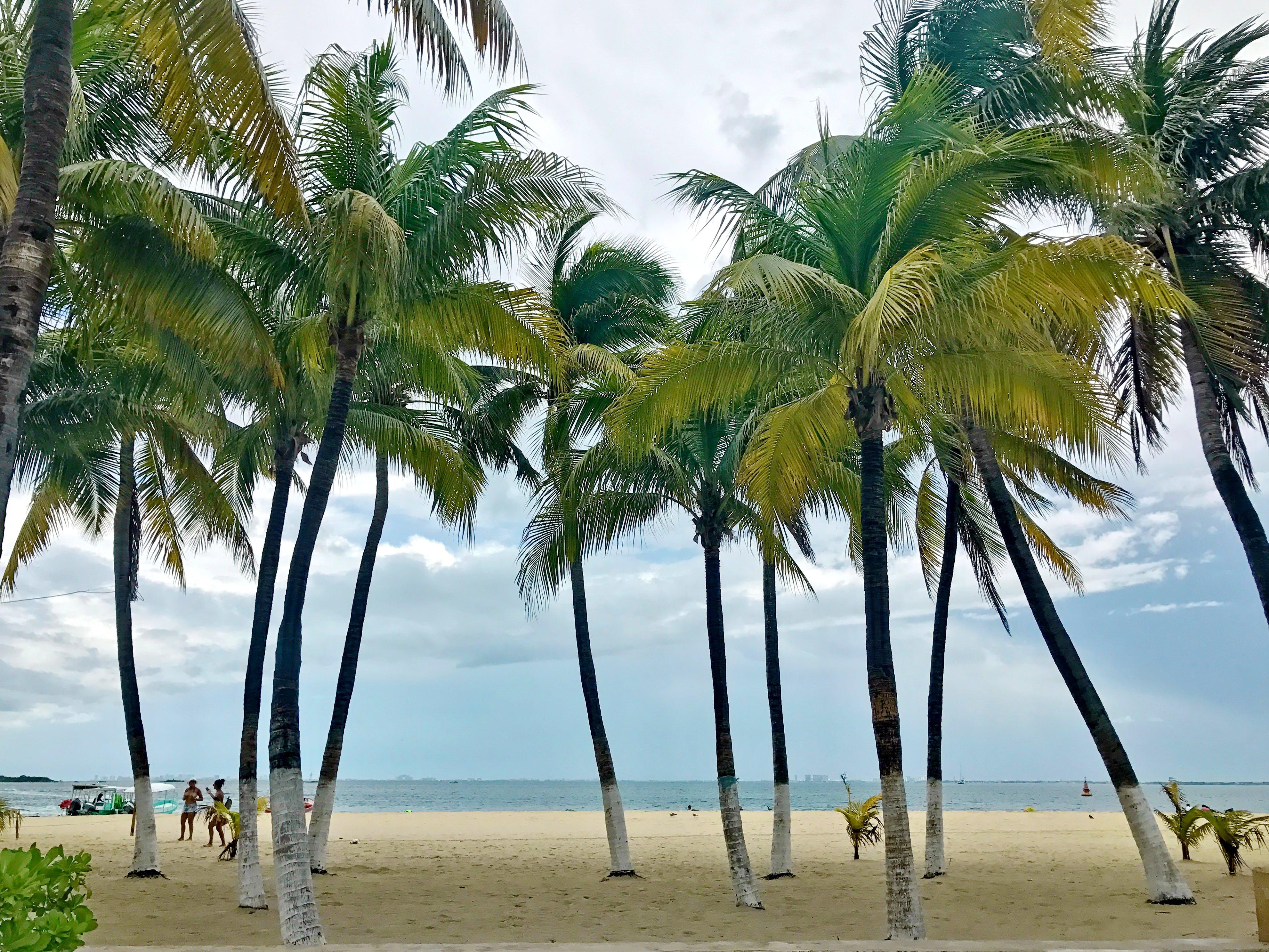 Free stock photo of mexico, cancun, caribbean sea, quintana roo