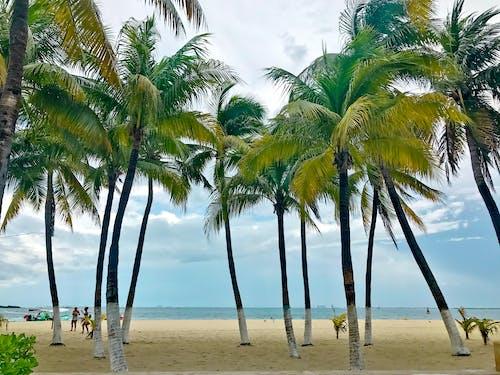 Fotobanka sbezplatnými fotkami na tému cancun, isla mujeres, karibského mora