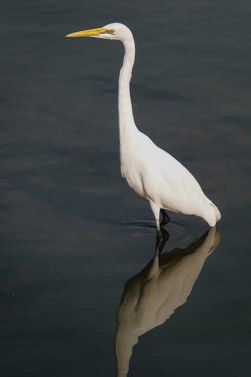 White Bird on Brown Wooden Stand