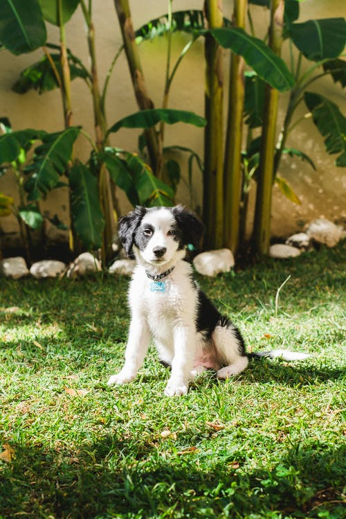 Cute fluffy black and white puppy sitting on green grass near plants in sunny day
