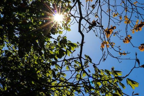 Immagine gratuita di alberi, arancia, arancione