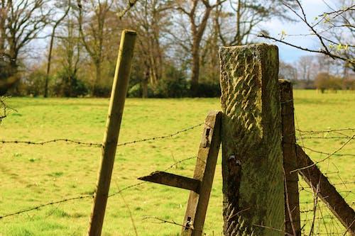 Immagine gratuita di albero, calcestruzzo, campo