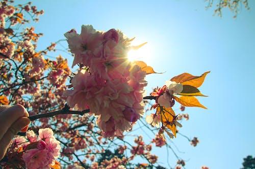 Immagine gratuita di albero, arancia, arancione