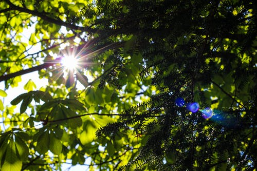 Immagine gratuita di alberi, estate, leggero