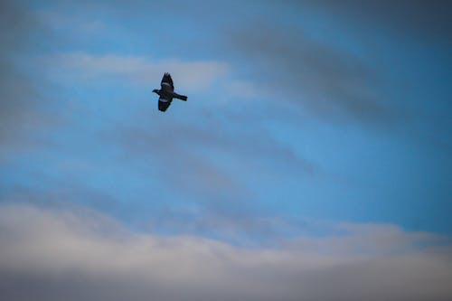 Immagine gratuita di cielo, cloud, legno