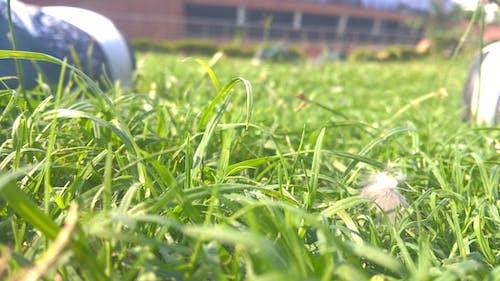 Free stock photo of grass, grass field, morning sun