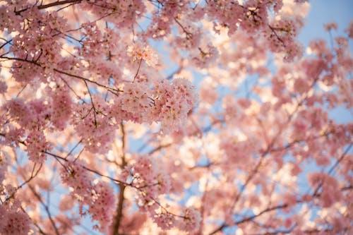 Gratis lagerfoto af blomster, blomsterflora, by