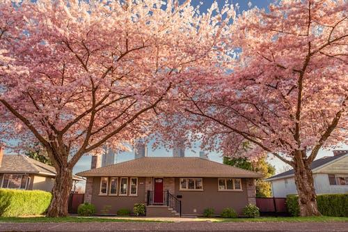 Gratis lagerfoto af arkitektur, blomst, bygning