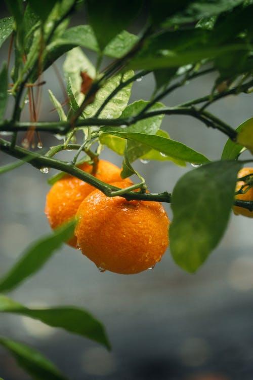 Gratis lagerfoto af blad, flora, frugt