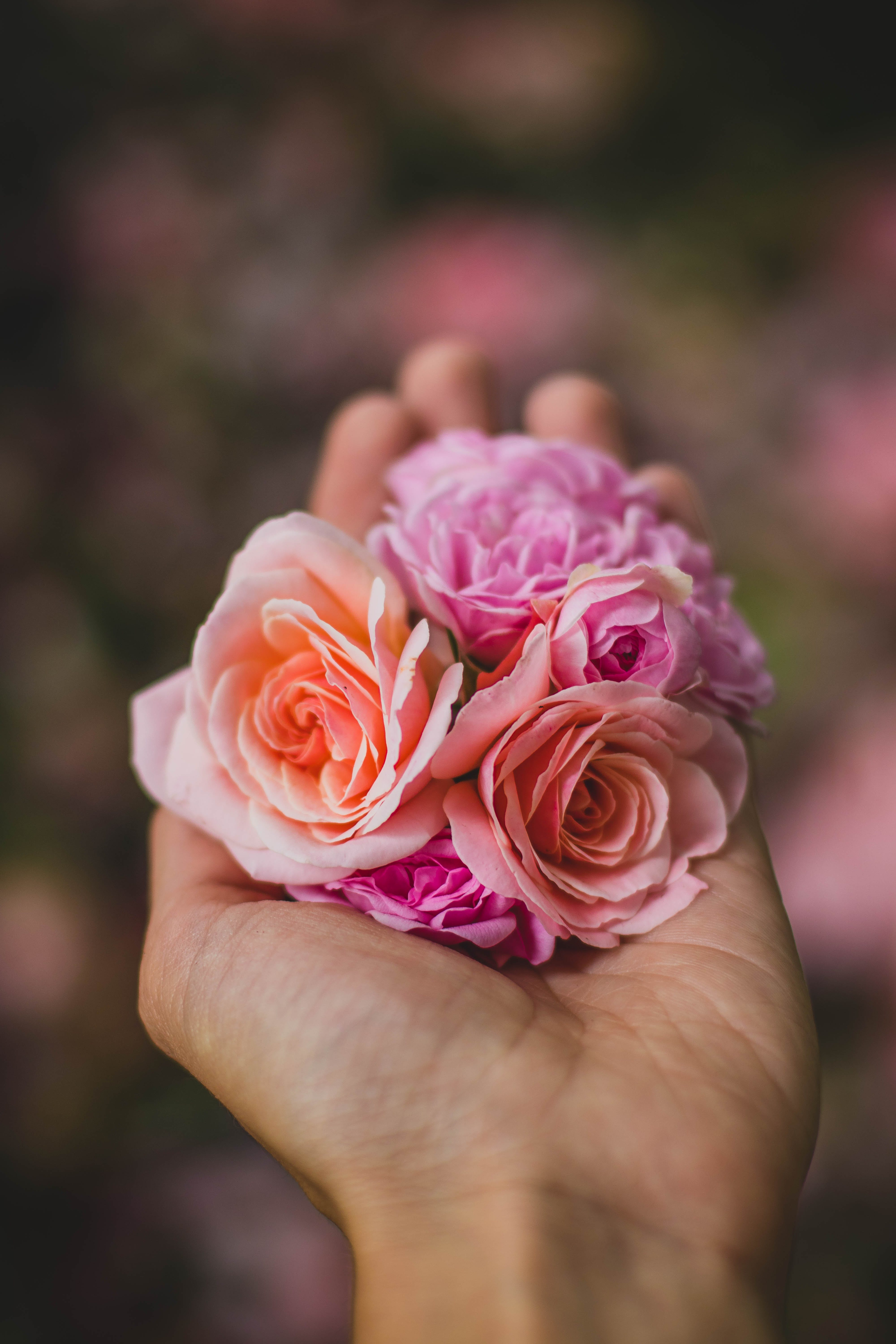 Free stock photo of love, hand, flowers, petals