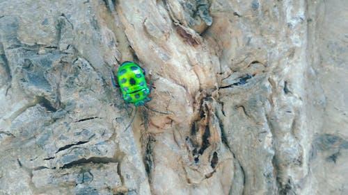ağaç, ahşap, ahşap böcek, böcek içeren Ücretsiz stok fotoğraf