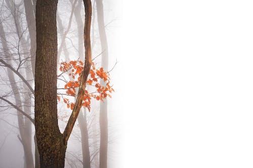 Základová fotografie zdarma na téma barvy podzimu, les, mlha, podzimní barvy