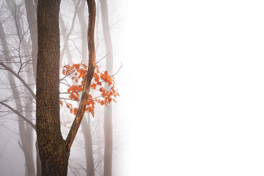 arbre, brouillard, couleurs automnales