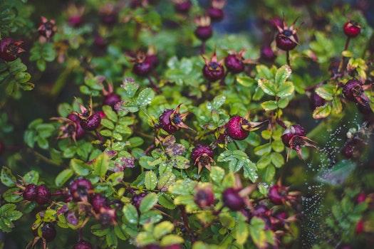 Free stock photo of nature, shrub, garden, park