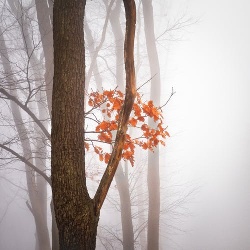 Základová fotografie zdarma na téma barvy podzimu, listoví, mlha, oranžová