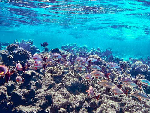 Coral Reef on Body of Water