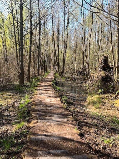 Free stock photo of beautiful nature, beauty nature, bog