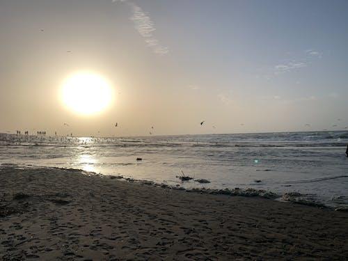 Free stock photo of beach, beach break, bird