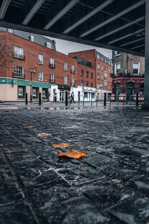 Free stock photo of after rain, autumn, autumn leaf