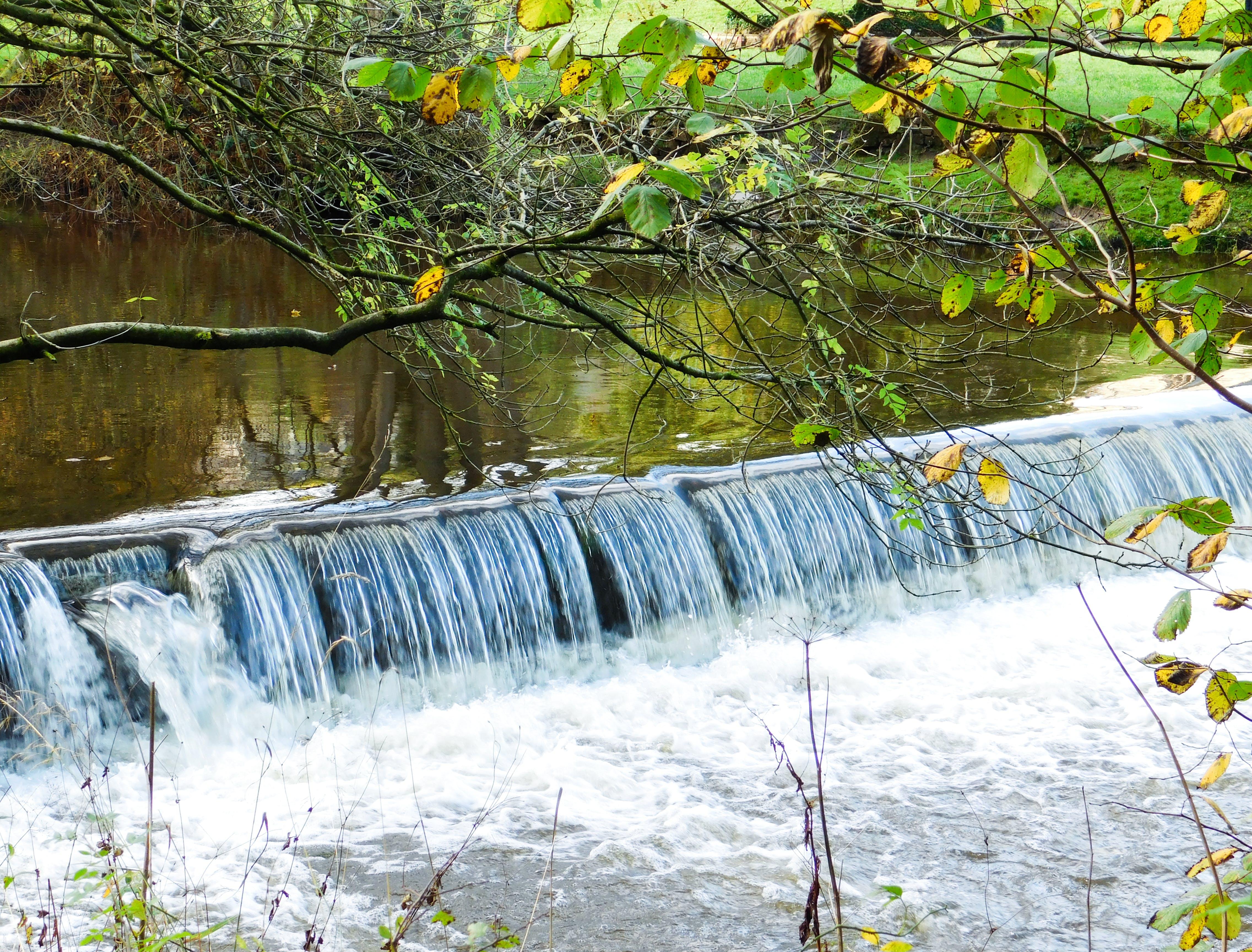 Free stock photo of mothernature, nature, nature park, nature photography