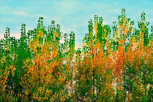 Darmowe zdjęcie z galerii z drzewa, natura