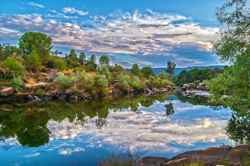 Darmowe zdjęcie z galerii z drzewa, krajobraz, natura, pochmurne niebo