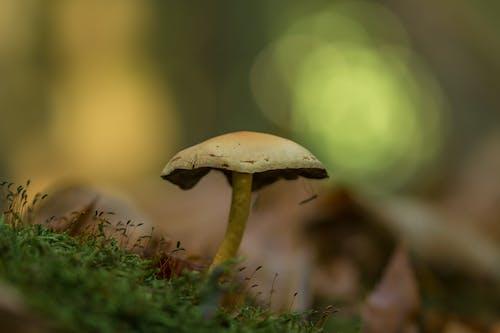 增長, 宏觀, 微距攝影, 毒菌 的 免费素材图片