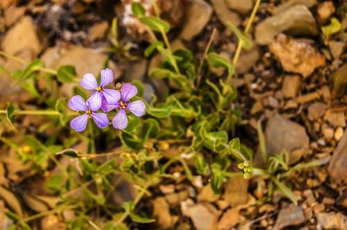Darmowe zdjęcie z galerii z kwiaty, natura