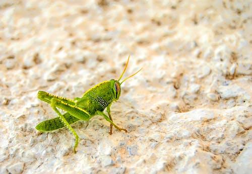 Green Grasshopper on White Surface