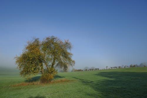 Free stock photo of blue, blue sky, fog