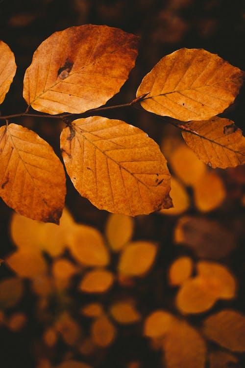 Folhas Marrons Em Macro