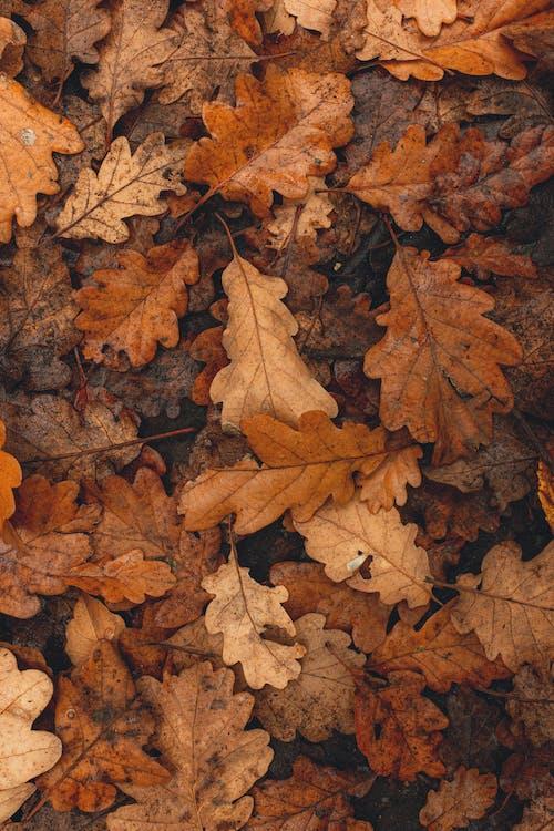 Braune Getrocknete Blätter Auf Dem Boden