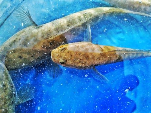 คลังภาพถ่ายฟรี ของ H2O, ครีบ, ถัง, ทะเล