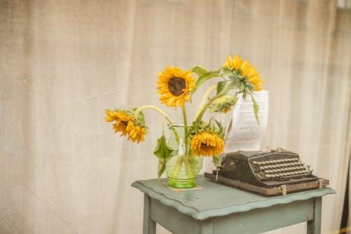 Fotobanka sbezplatnými fotkami na tému flóra, interiérový dizajn, jeseň