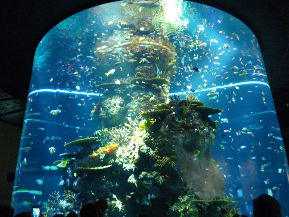 Free stock photo of animal, aquarium, big aquarium