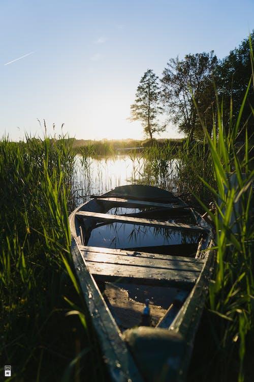 Imagine de stoc gratuită din apă, apus, arbore, barcă