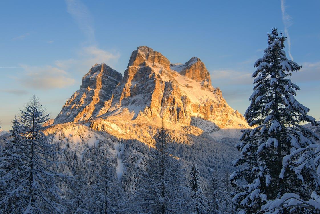 Montagne Couverte De Neige Avec Des Pins