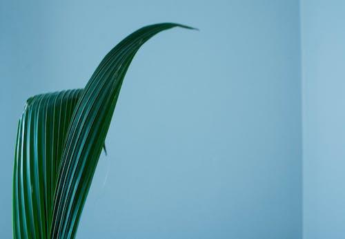 Foto profissional grátis de azul, branco, ecológico, flor