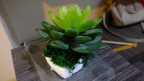 Free stock photo of plant, royalgcorps