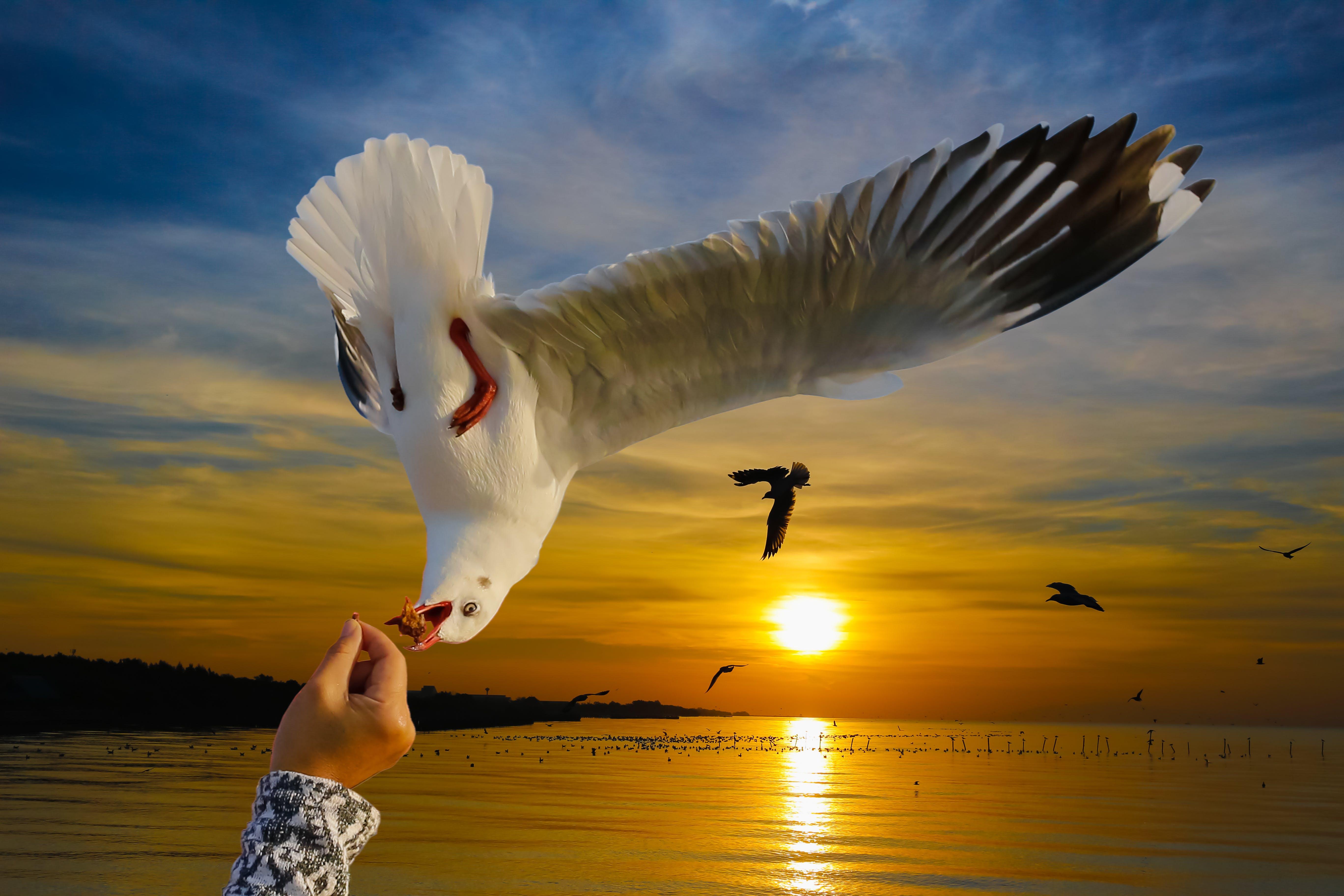 Безкоштовне стокове фото на тему «Рука, тварина, чайки»