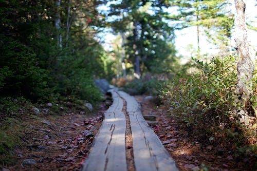 Δωρεάν στοκ φωτογραφιών με acadia, maine, trekking, άγριος
