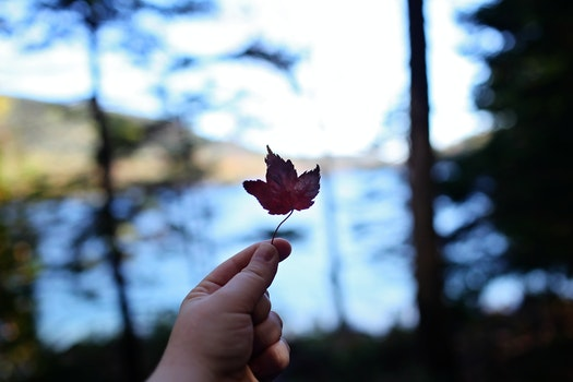 Free stock photo of nature, leaf, woods, depth of field
